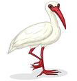 Ibis on white vector
