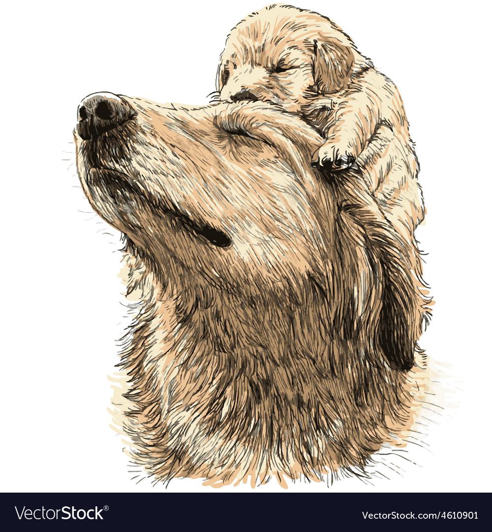 Labrador retriever 20 vector | Price: 3 Credit (USD $3)