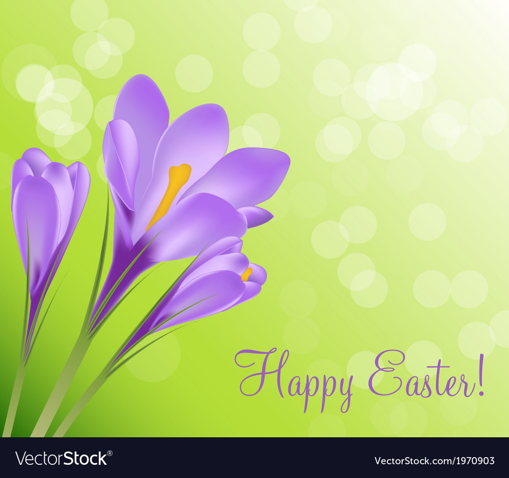 Happy easter card with crocuses vector | Price: 1 Credit (USD $1)