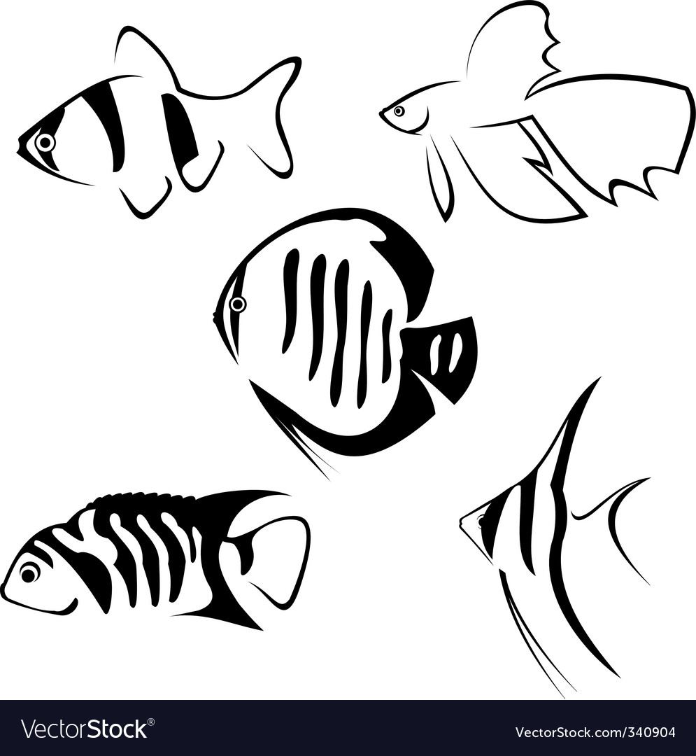 Fish line drawing vector | Price: 1 Credit (USD $1)
