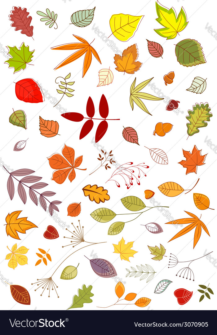 Autumn leaves and inflorescences vector | Price: 1 Credit (USD $1)