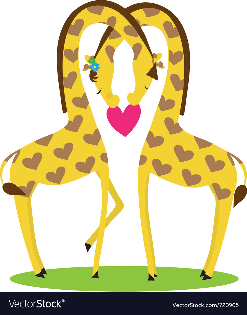 Two giraffes male and female nestled together in t vector