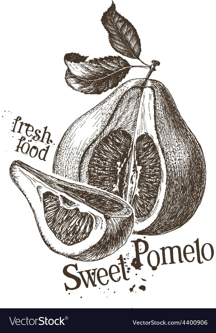 Pomelo logo design template fresh fruit vector | Price: 3 Credit (USD $3)