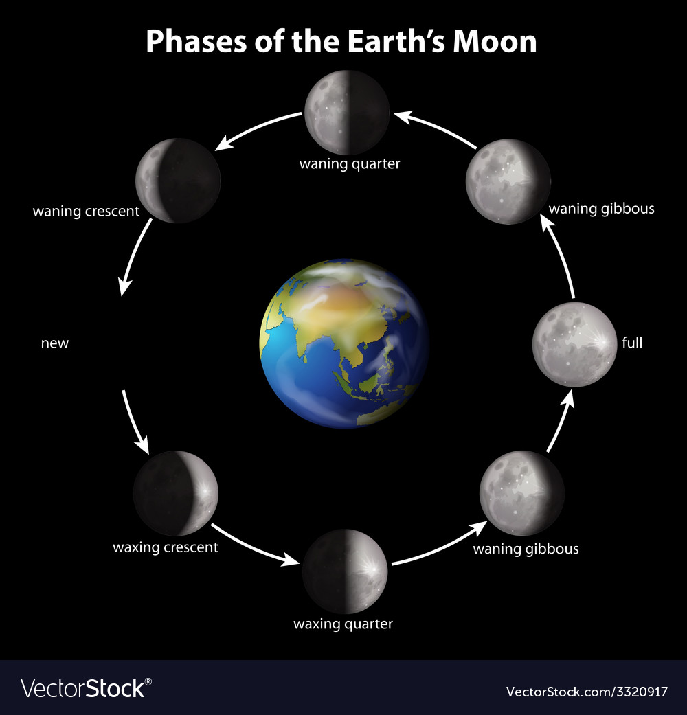 Phases of the earths moon vector | Price: 1 Credit (USD $1)