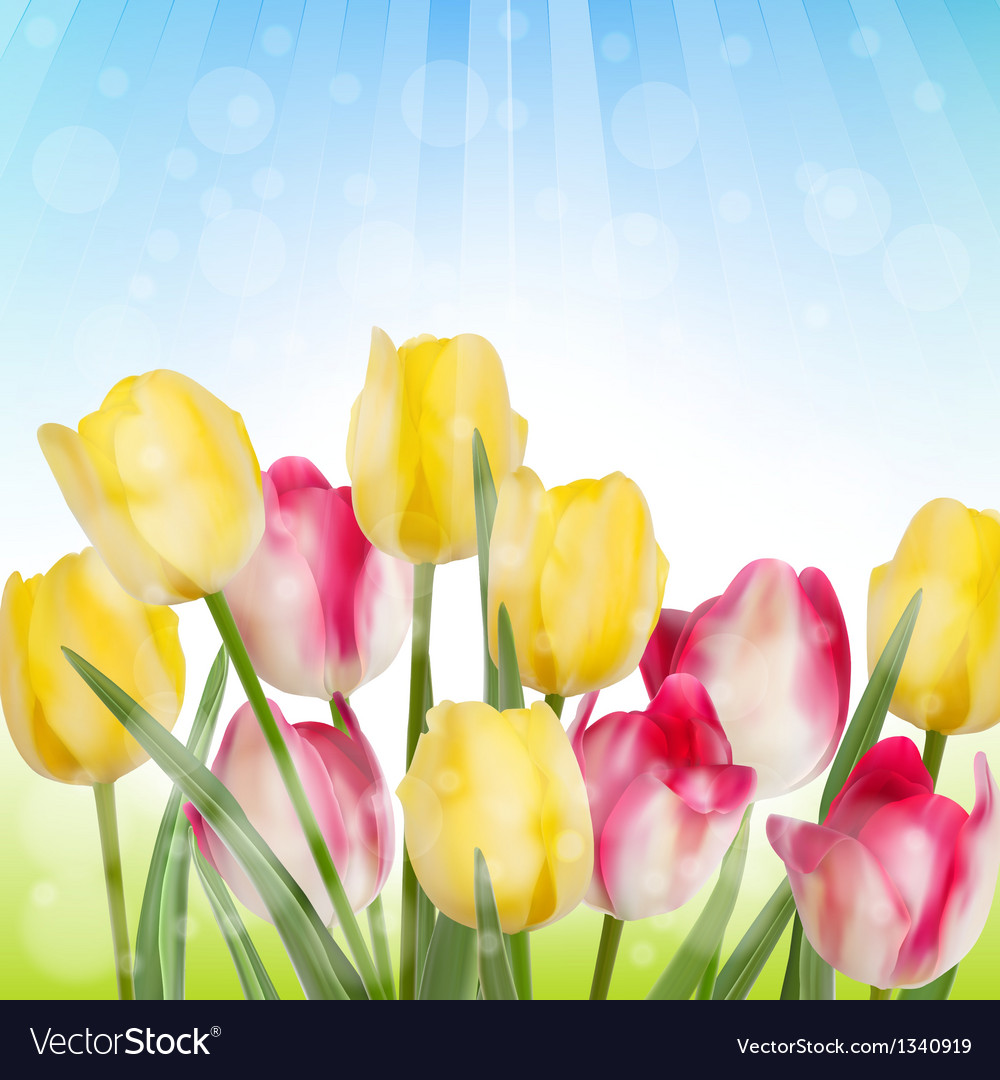 Wild flowers covered with in sunlight eps 10 vector | Price: 1 Credit (USD $1)