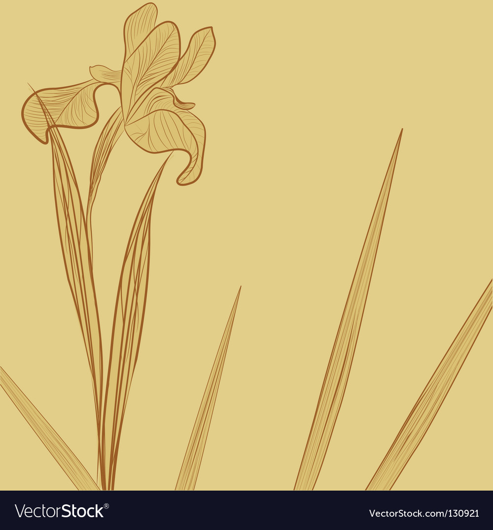 Floral background with iris flower vector | Price: 1 Credit (USD $1)
