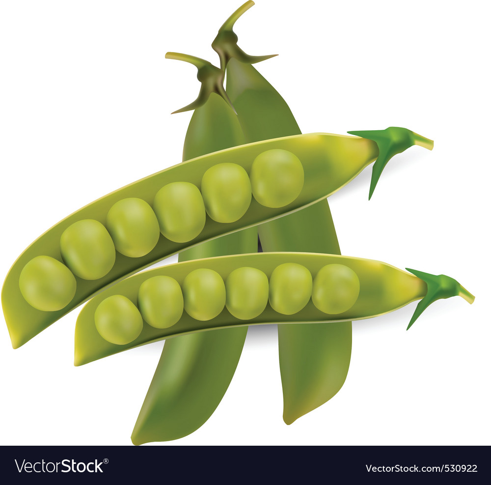 Peas vegetable with seed vector vector | Price: 1 Credit (USD $1)