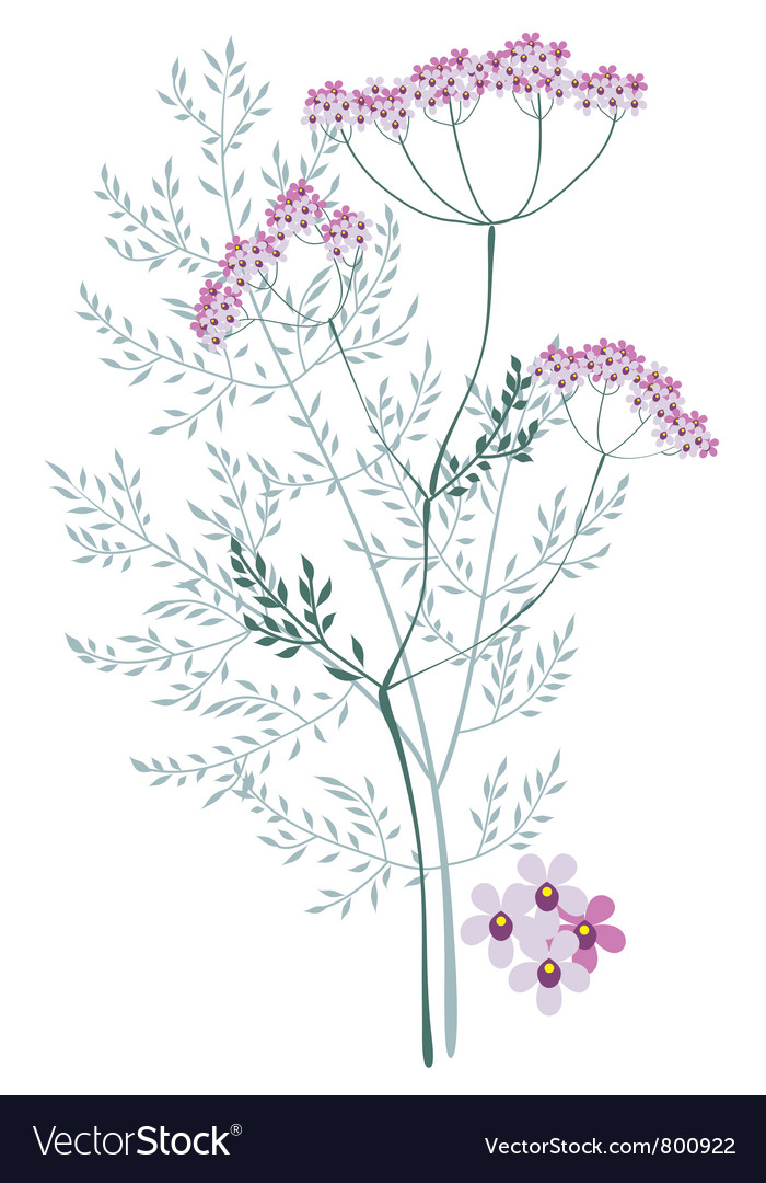 Valerian meadow plant vector | Price: 1 Credit (USD $1)