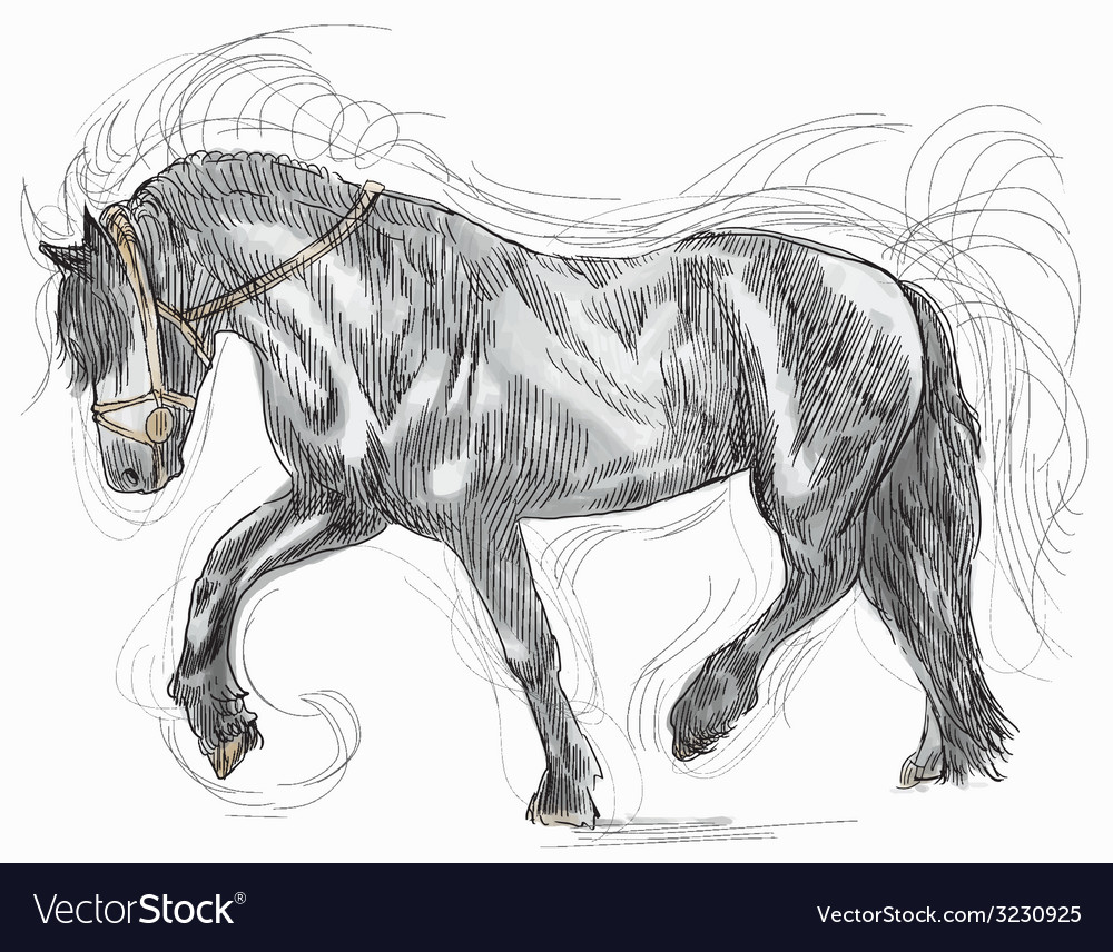 Black horse vector | Price: 1 Credit (USD $1)