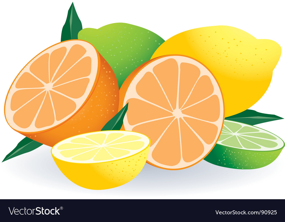 Citrus fruits vector | Price: 1 Credit (USD $1)