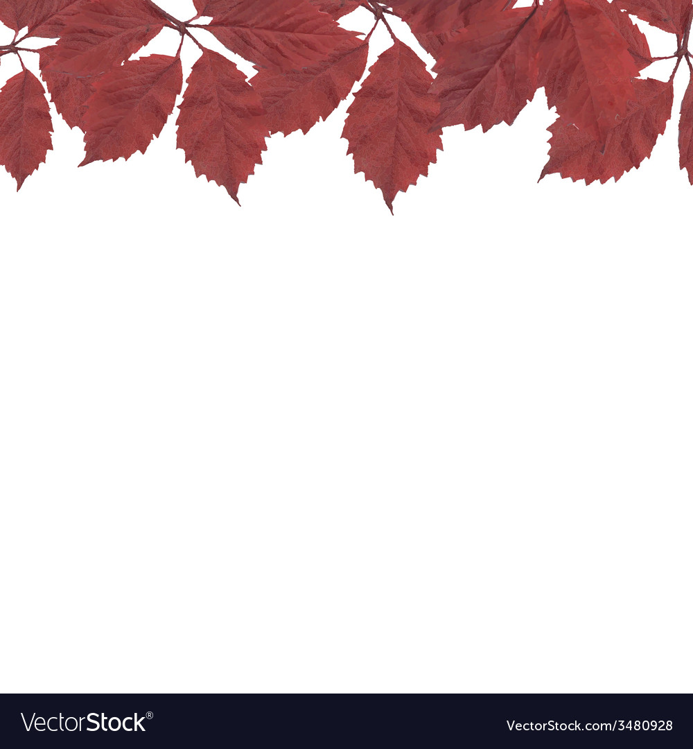 Red leaves border vector | Price: 1 Credit (USD $1)