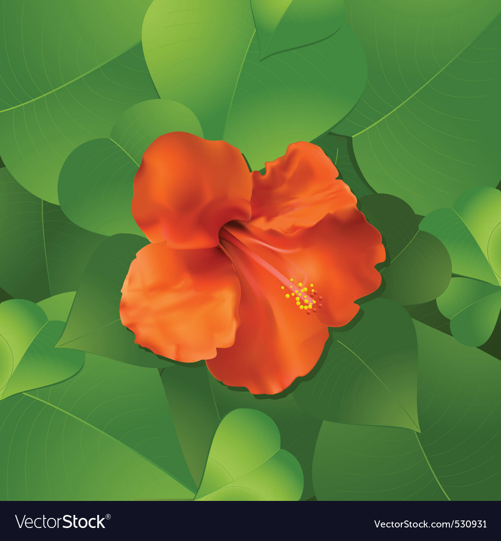 Orange hibiscus flower surrounded by lush green le vector | Price: 1 Credit (USD $1)