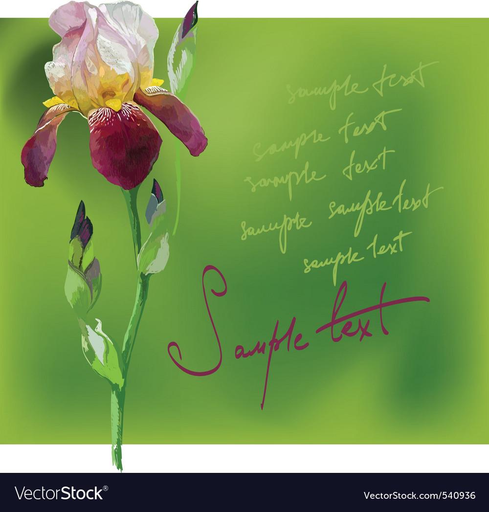 Beautiful flower iris vector | Price: 1 Credit (USD $1)
