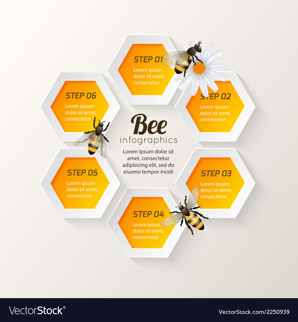 Bee infographics steps vector | Price: 1 Credit (USD $1)
