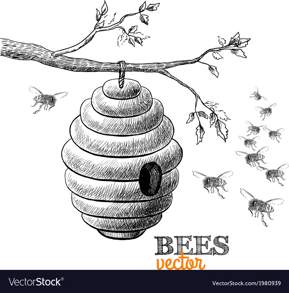 Honey bees and hive on tree branch vector | Price: 1 Credit (USD $1)