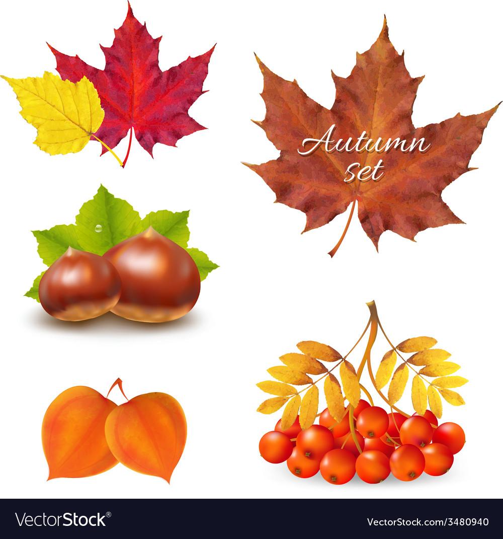 Vintage autumn set vector | Price: 1 Credit (USD $1)