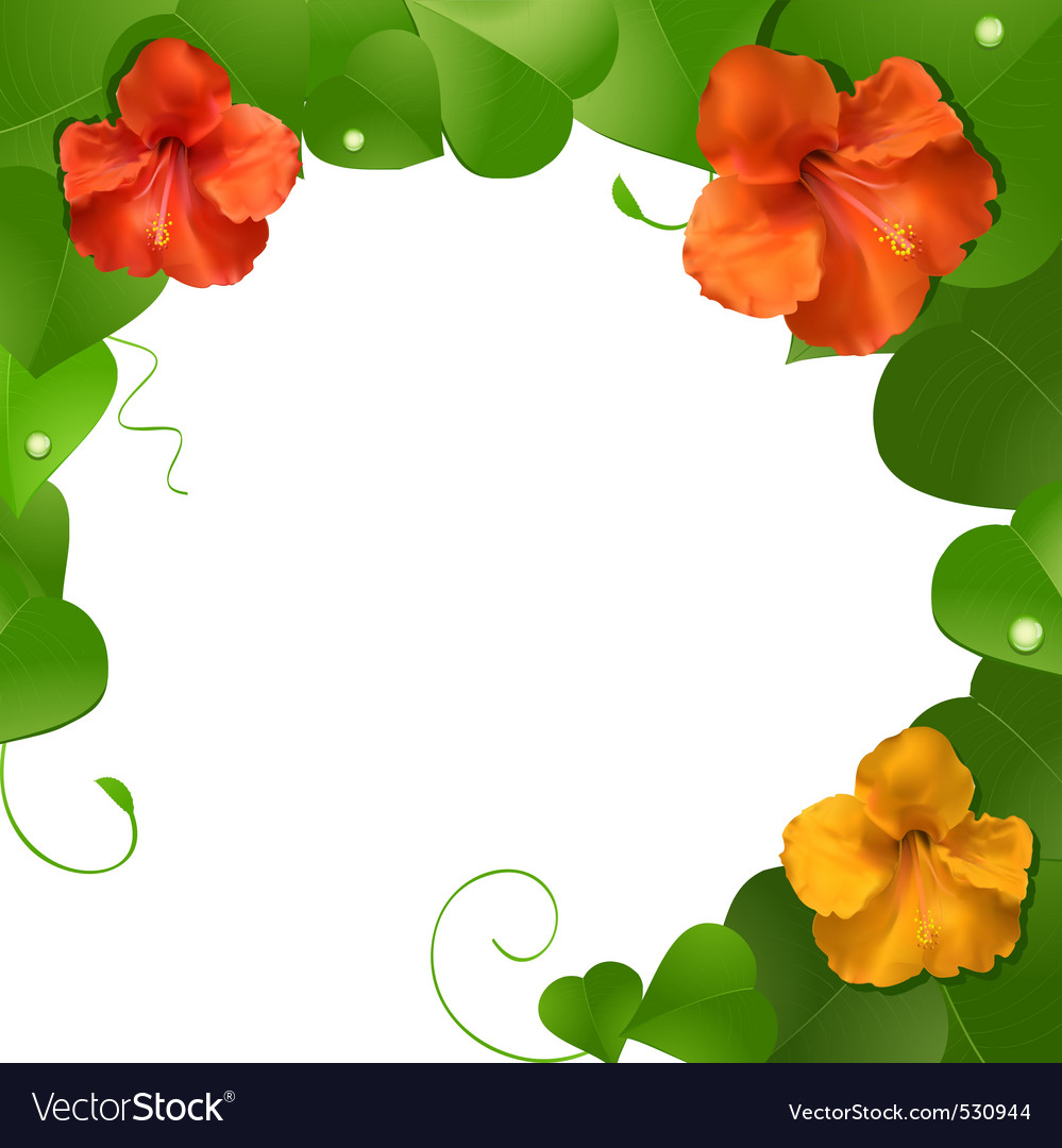 Orange and red hibiscus flowers on a lush green le vector | Price: 1 Credit (USD $1)