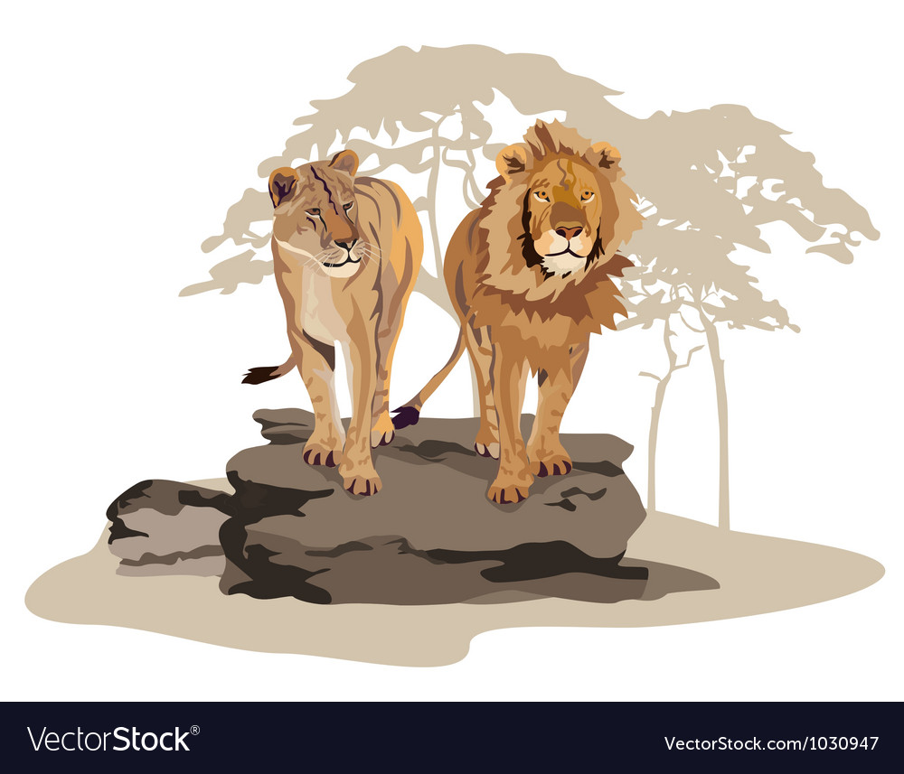African lions vector | Price: 1 Credit (USD $1)