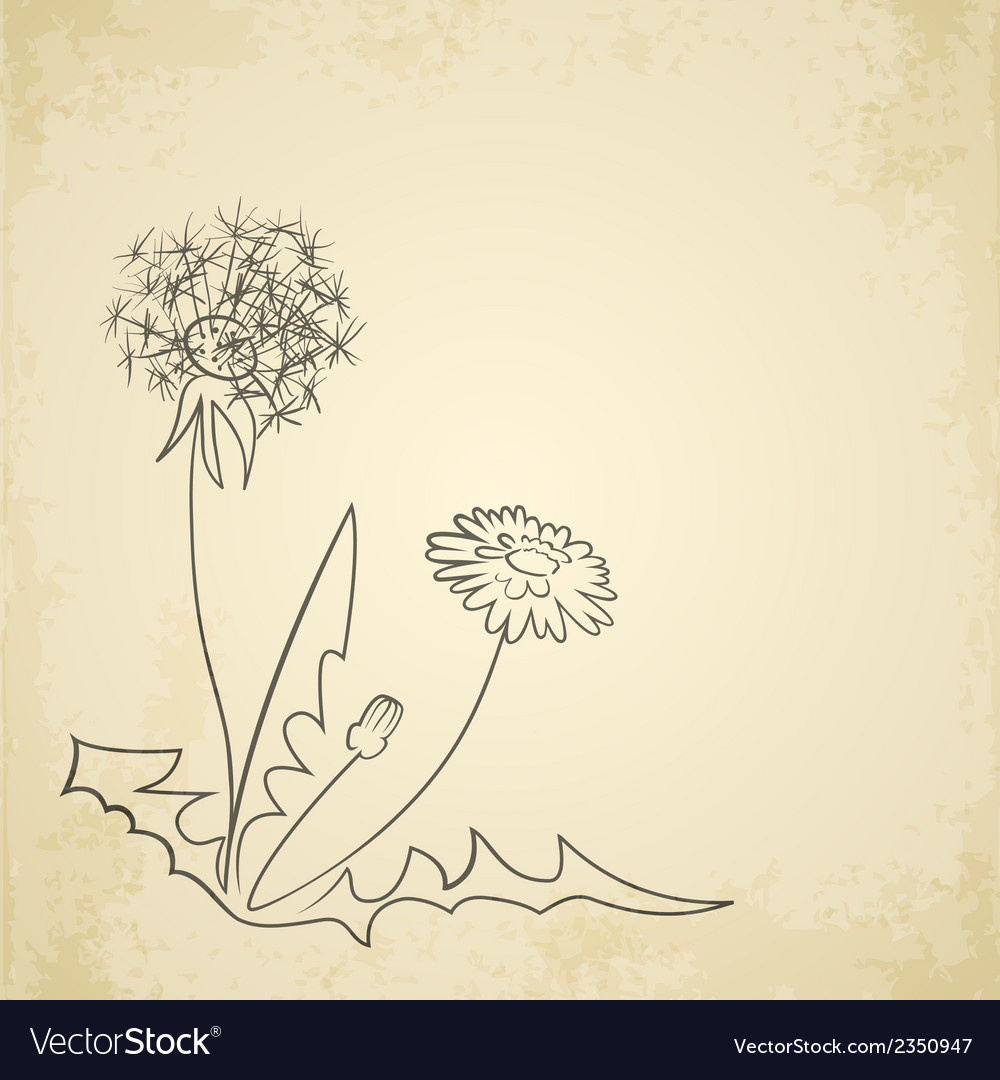 Dandelion pencil artwork on paper background vector | Price: 1 Credit (USD $1)