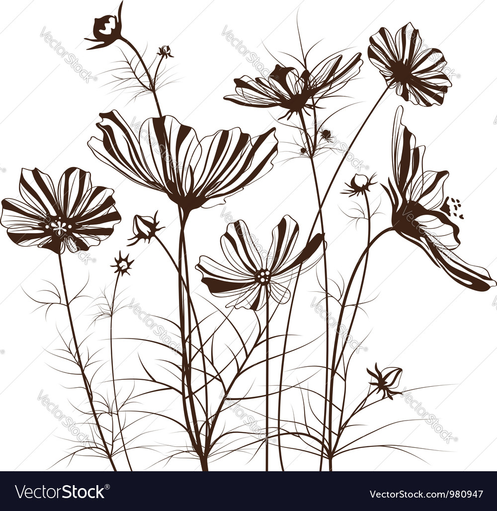 Garden flowers cosmos bipinnatus vector | Price: 1 Credit (USD $1)