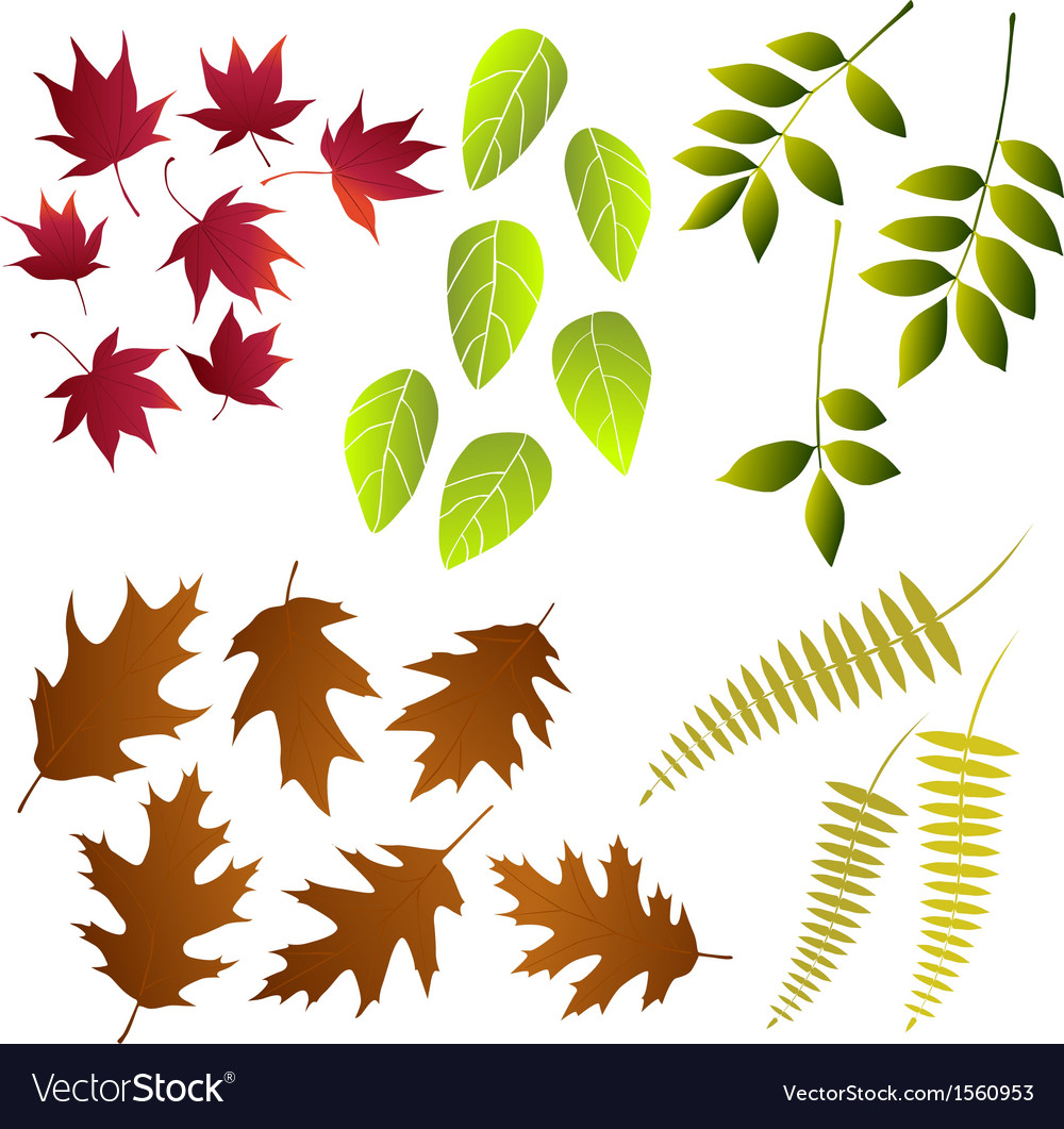 Leaf collection for designers vector | Price: 1 Credit (USD $1)