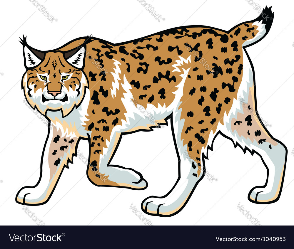 Lynx on white vector | Price: 1 Credit (USD $1)
