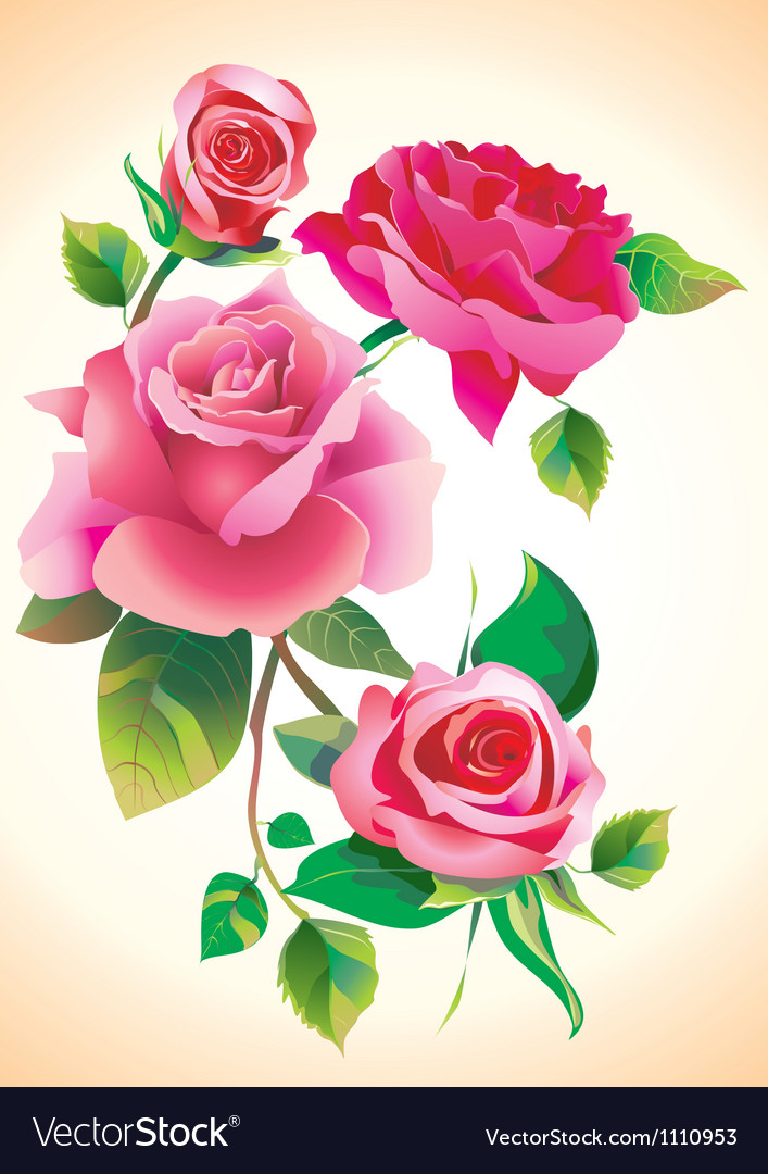 Roses vector   Price: 1 Credit (USD $1)