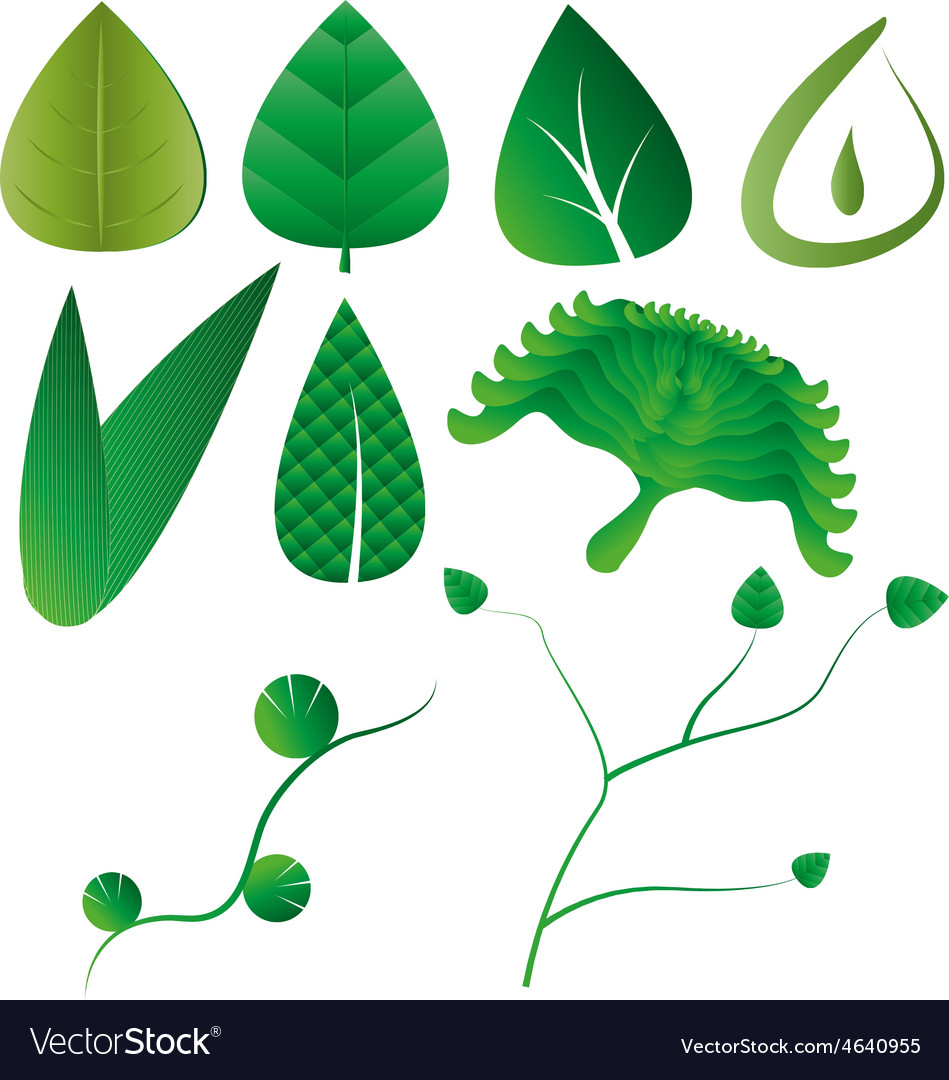 Leaf leaves collection vector | Price: 1 Credit (USD $1)