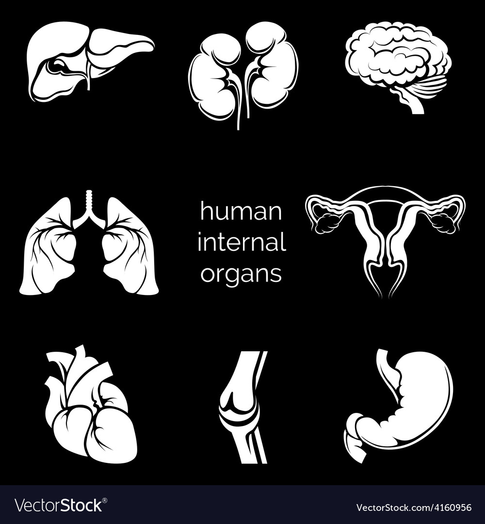 Internal human organs silhouettes vector | Price: 1 Credit (USD $1)