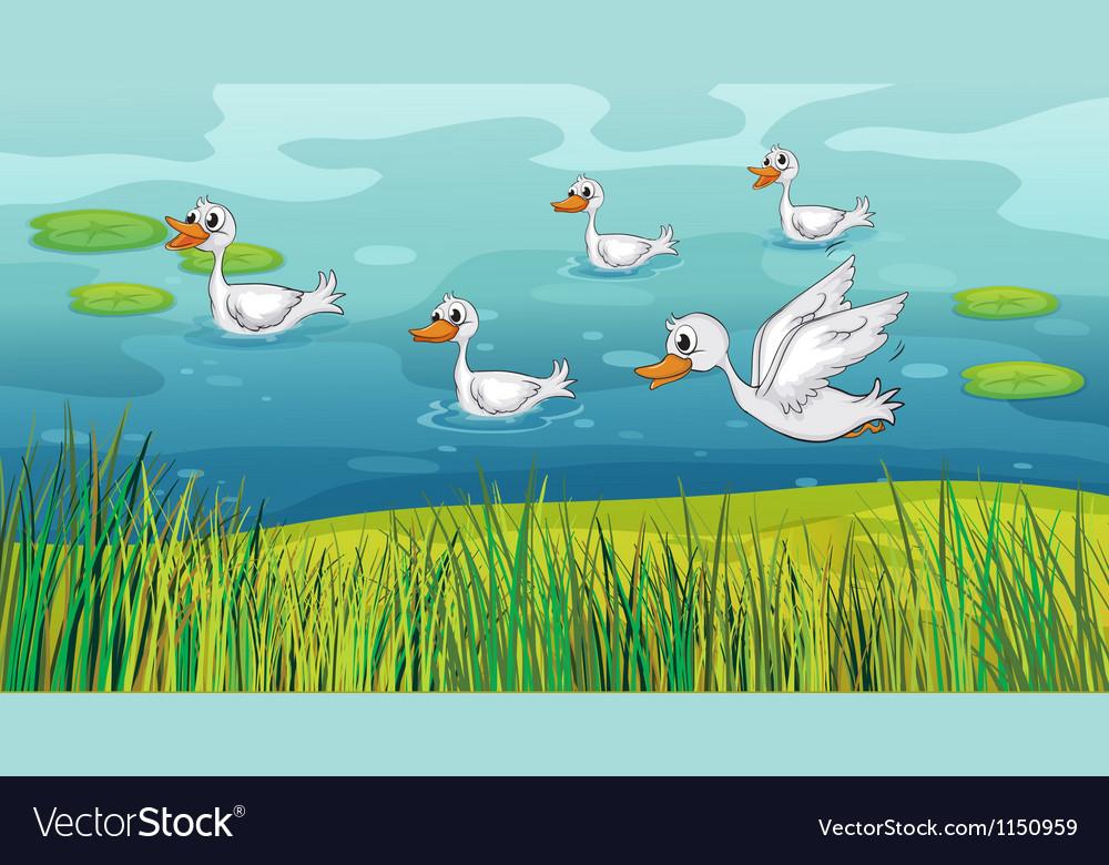 Ducks looking for foods vector | Price: 1 Credit (USD $1)