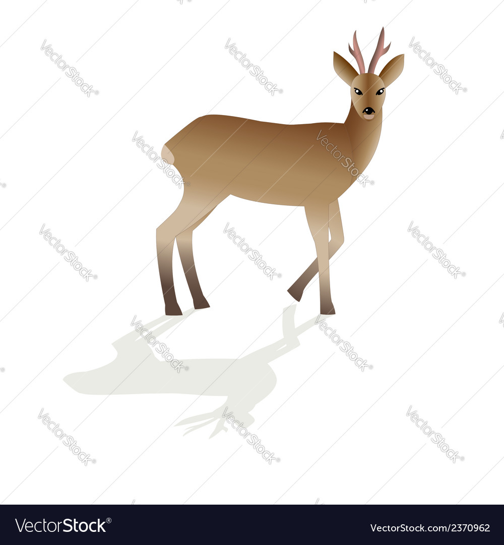 Roe deer image isolated vector | Price: 1 Credit (USD $1)
