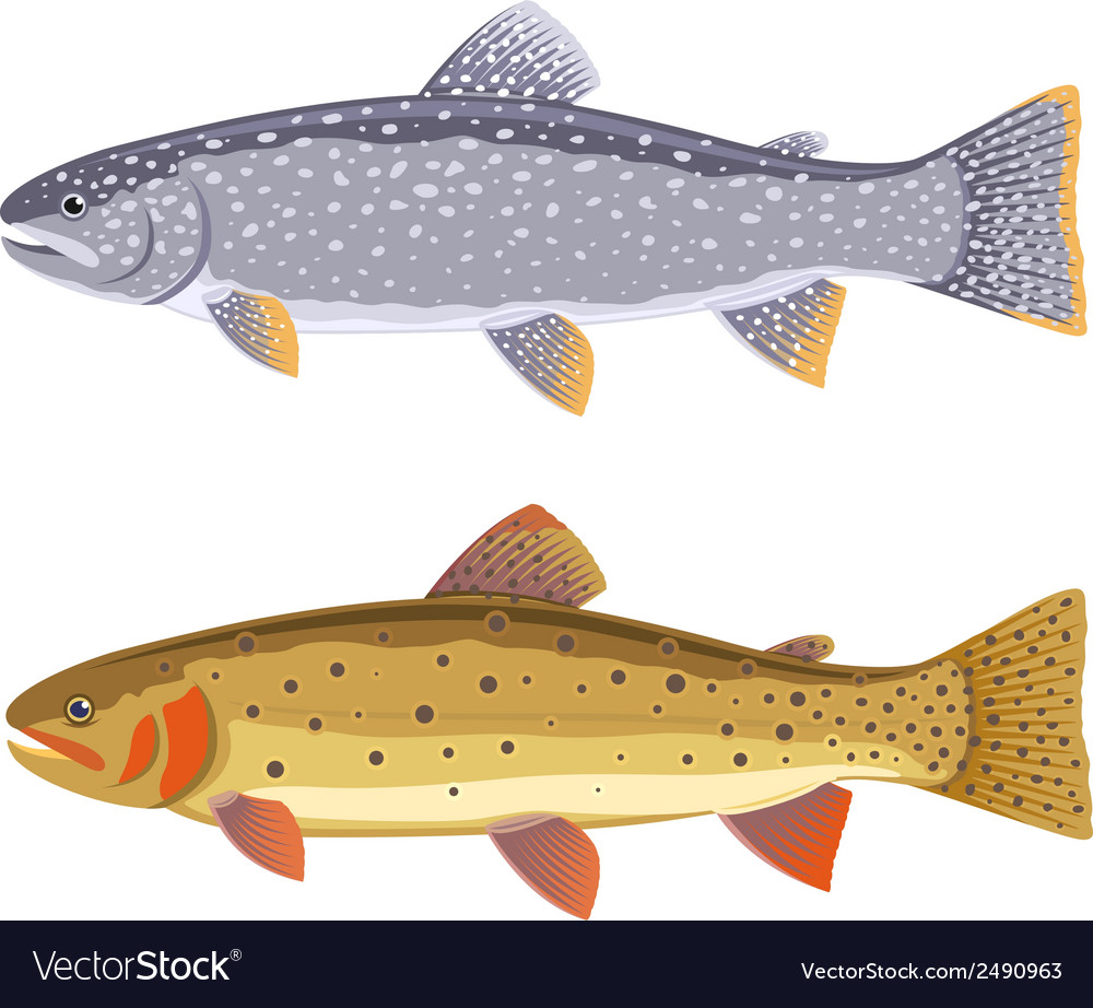 Lake trout and cutthroat trout vector | Price: 1 Credit (USD $1)