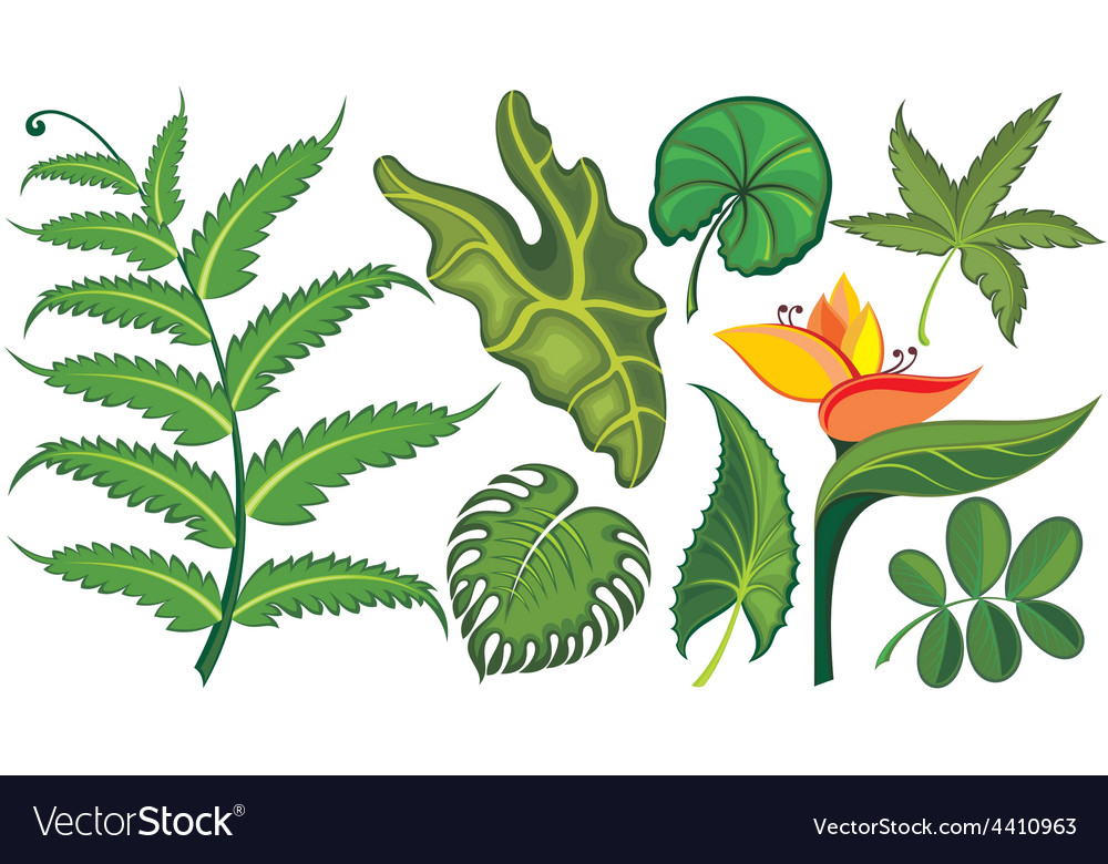 Set of tropical leaves and flowers vector | Price: 1 Credit (USD $1)
