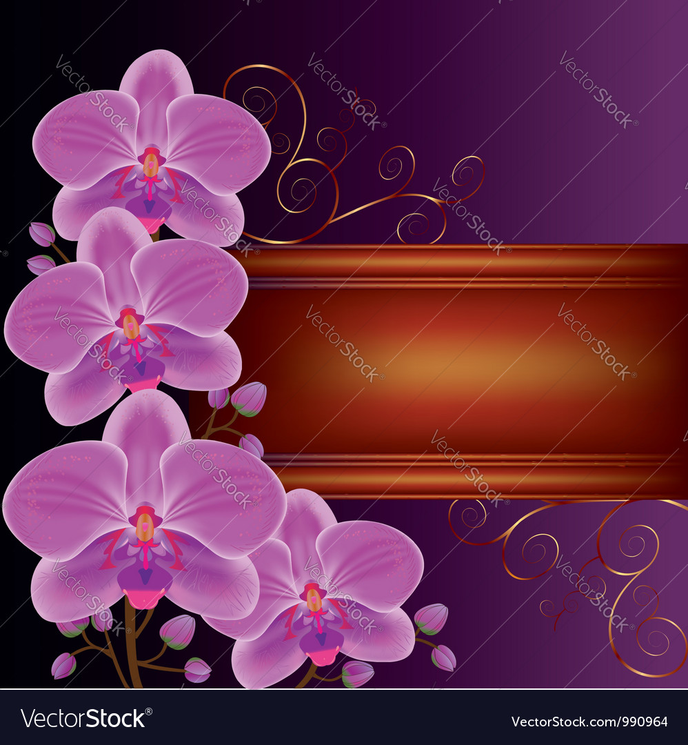 Background with exotic flower orchids vector | Price: 1 Credit (USD $1)