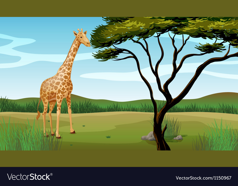 A giraffe vector | Price: 1 Credit (USD $1)