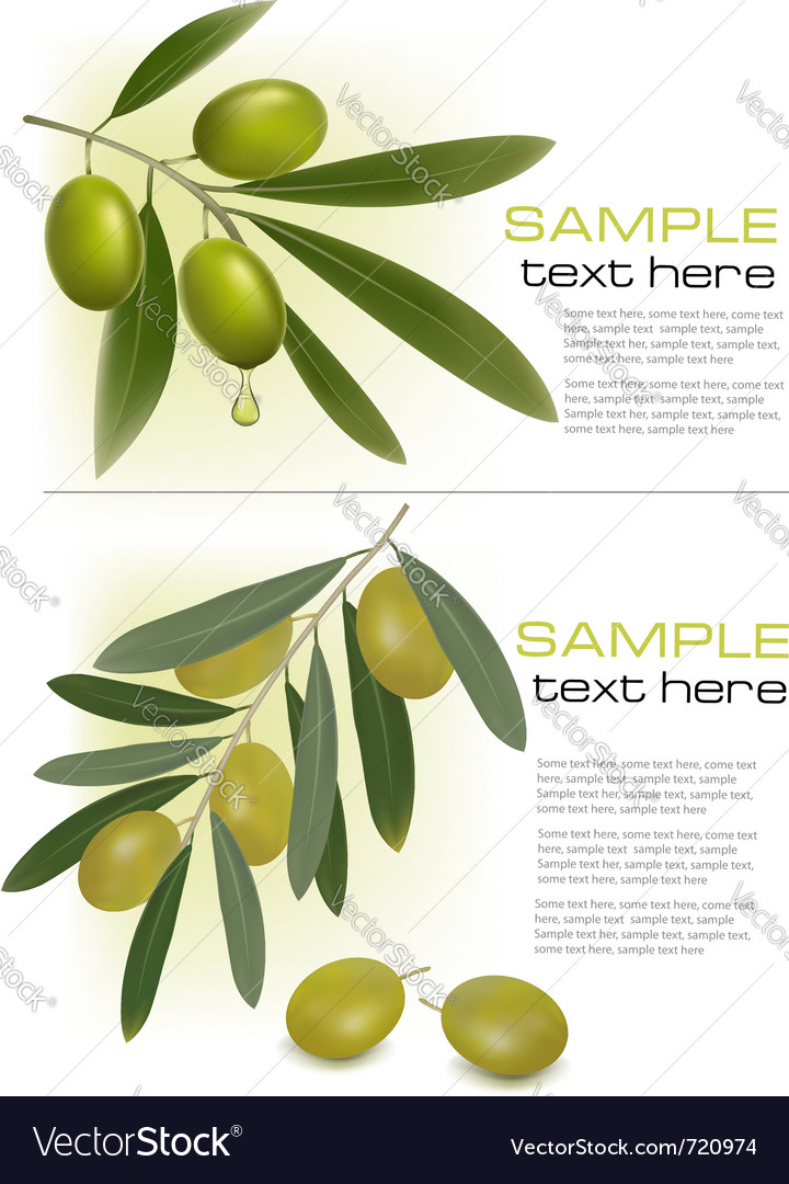 Olive branchs vector