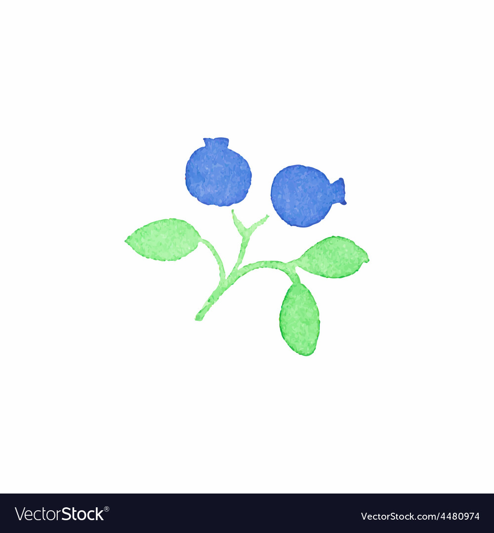 Watercolor blueberry on the white background vector | Price: 1 Credit (USD $1)