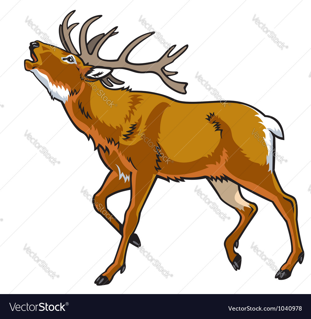 Red deer vector | Price: 1 Credit (USD $1)