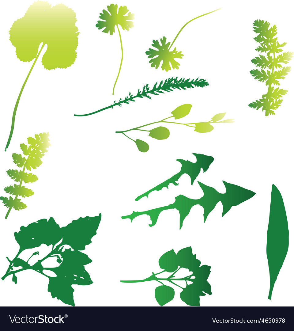 Weed 03 resize vector   Price: 1 Credit (USD $1)