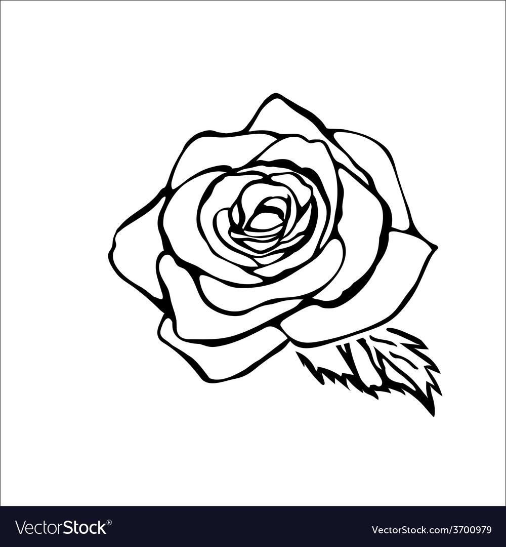 Rose sketch vector   Price: 1 Credit (USD $1)