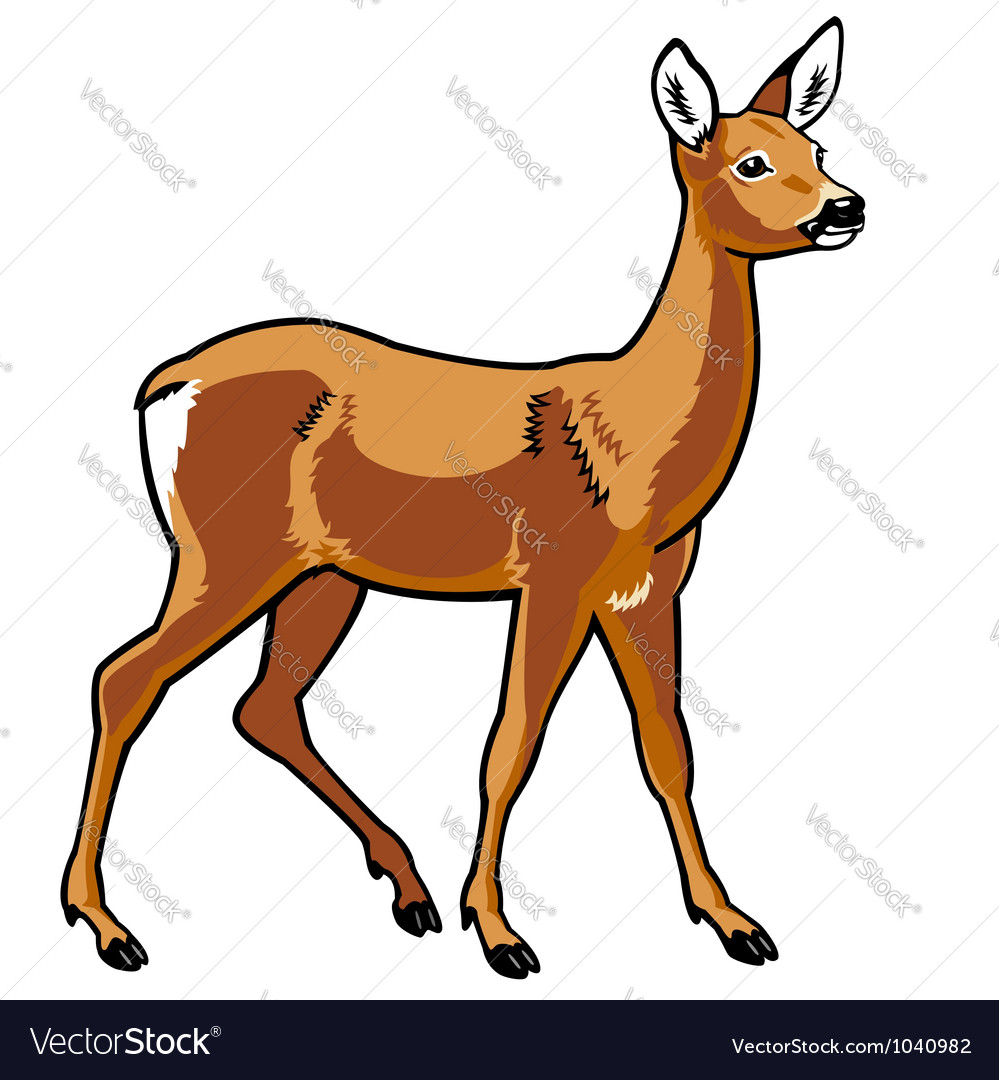 Roe deer vector