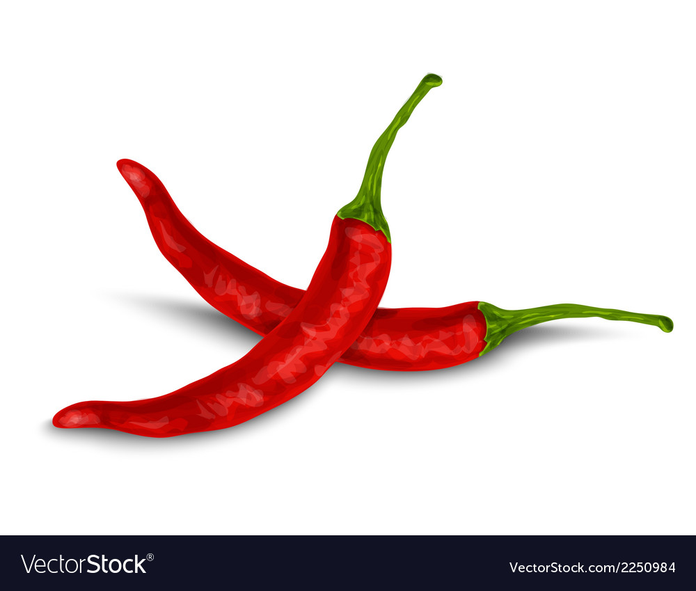 Chili pepper isolated on white vector | Price: 1 Credit (USD $1)