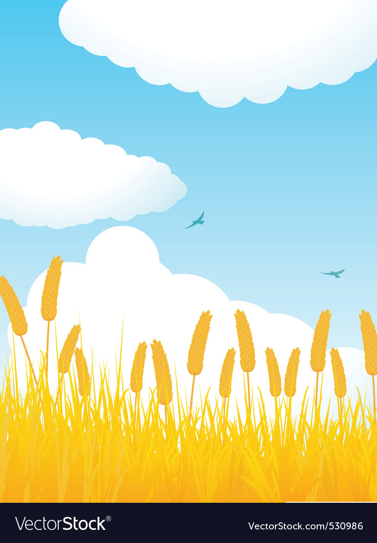 Field of corn against a blue sky with fluffly clou vector | Price: 1 Credit (USD $1)