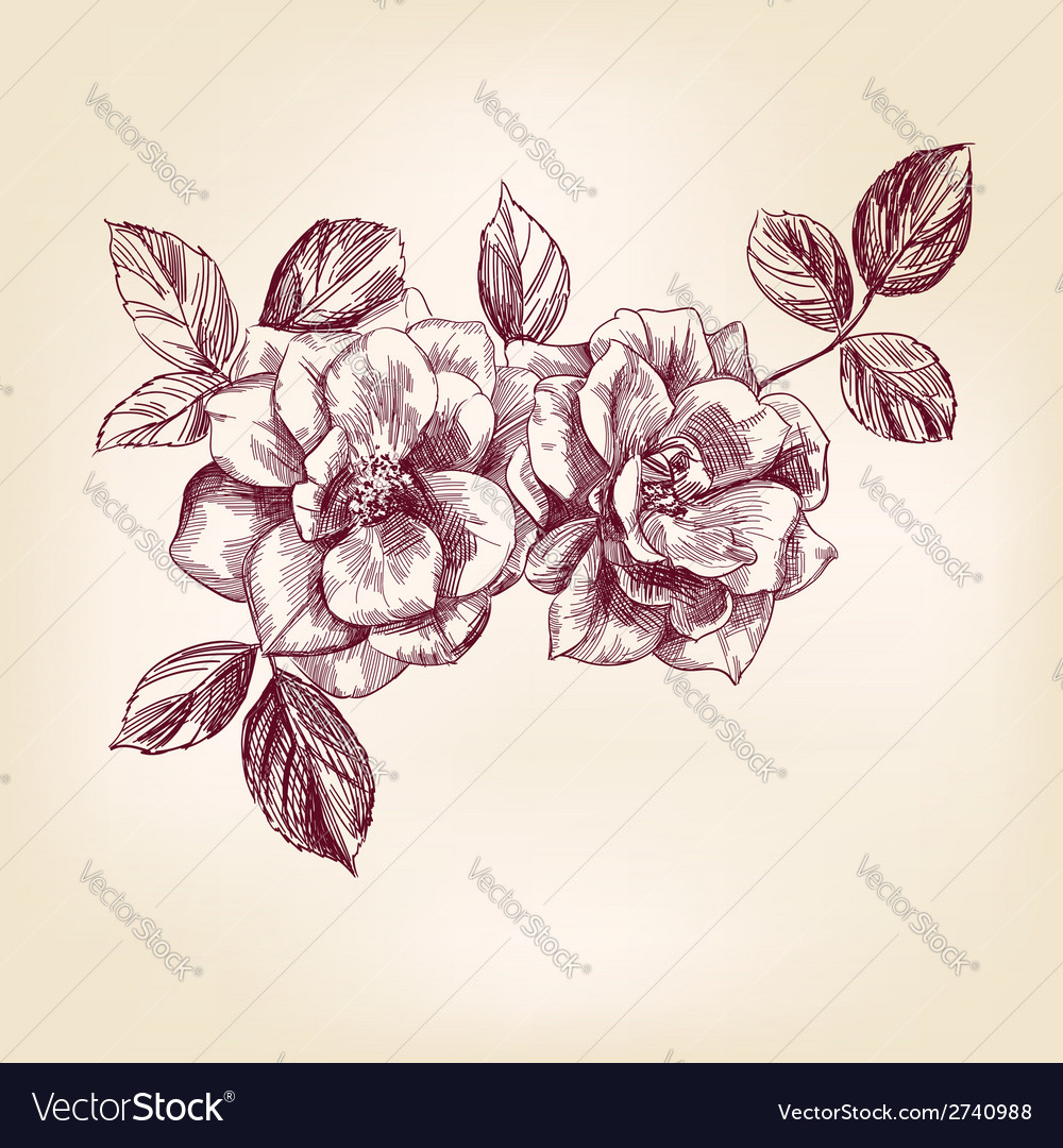 Hand drawn roses vector | Price: 1 Credit (USD $1)