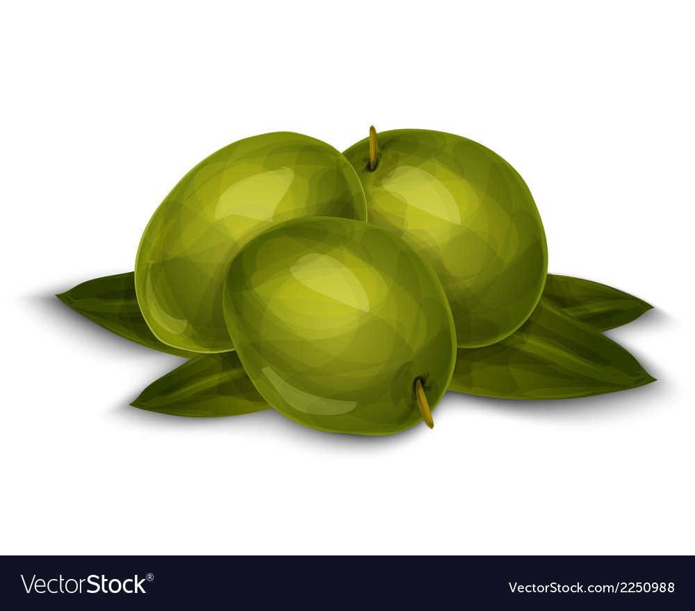 Olives isolated on white vector | Price: 1 Credit (USD $1)