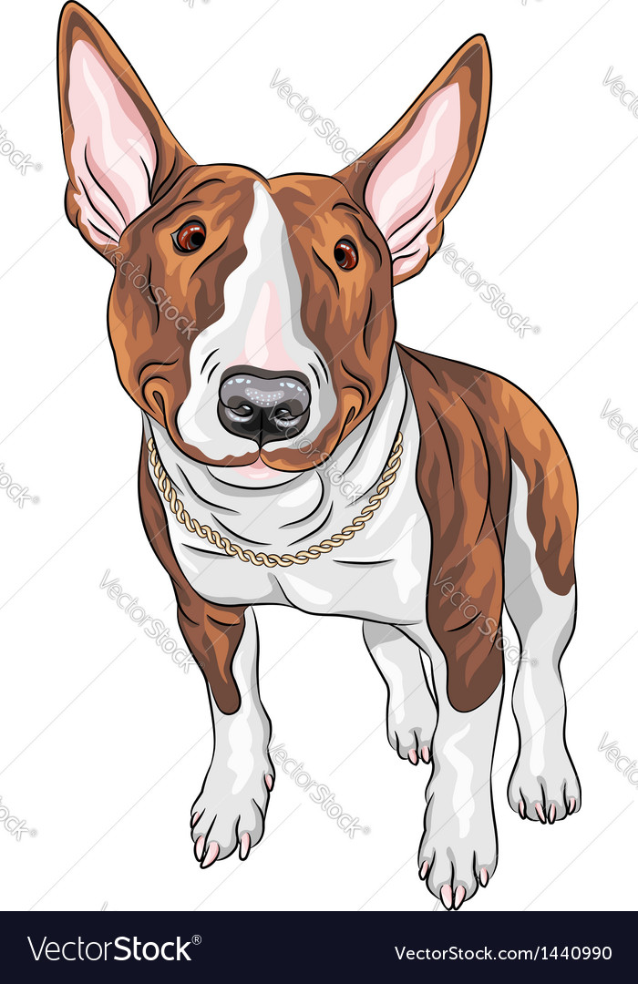 Bull terrier dog breed vector | Price: 3 Credit (USD $3)