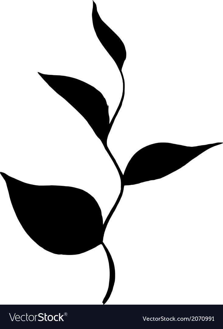 Silhouette branch of tea with leaves vector   Price: 1 Credit (USD $1)