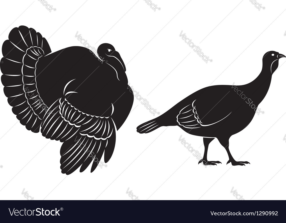 Bird turkey vector | Price: 1 Credit (USD $1)