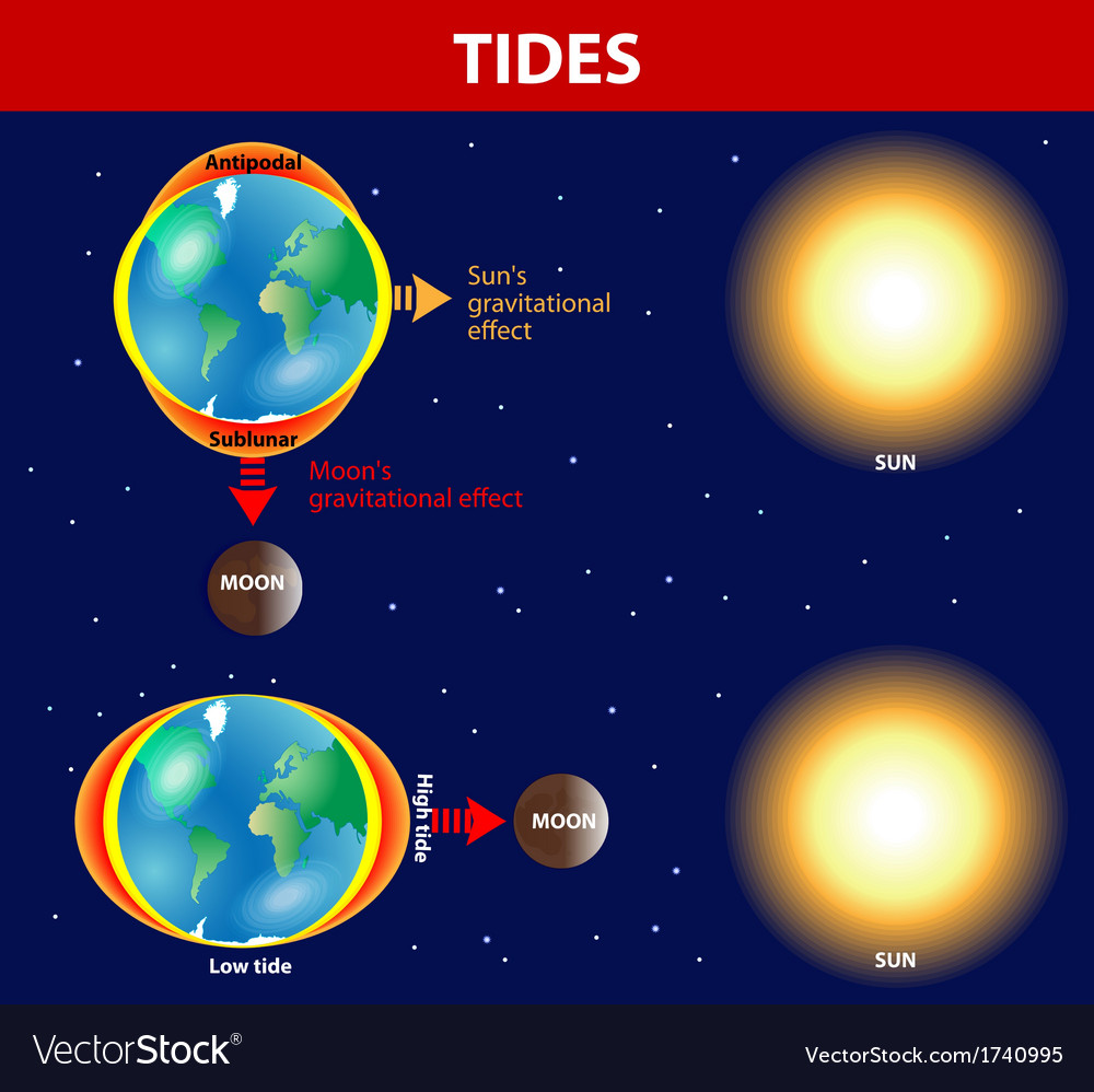 Tides vector | Price: 1 Credit (USD $1)