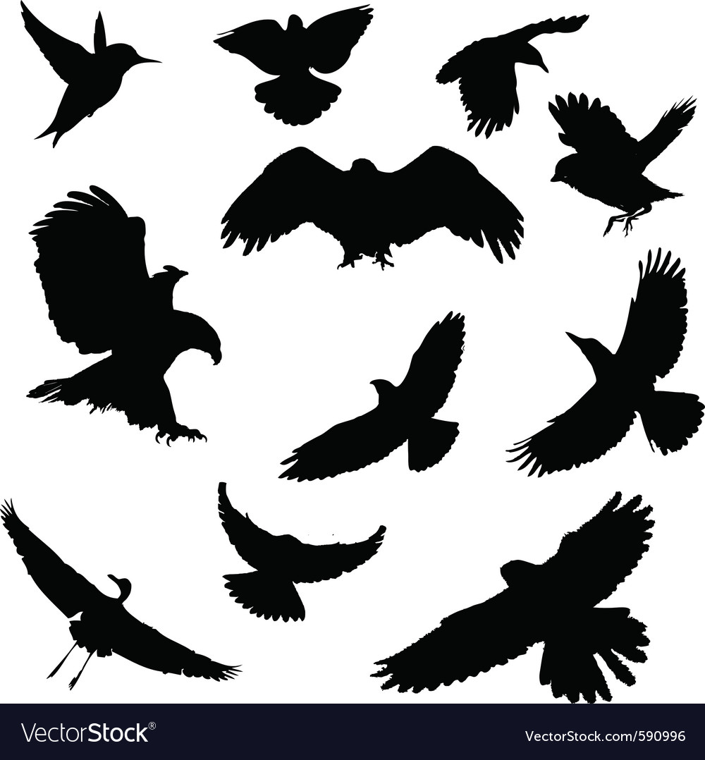 Silhouettes of birds vector | Price: 1 Credit (USD $1)